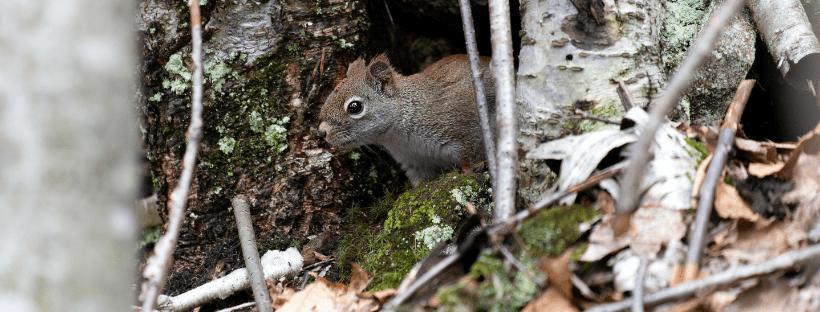 redefine self help squirrel
