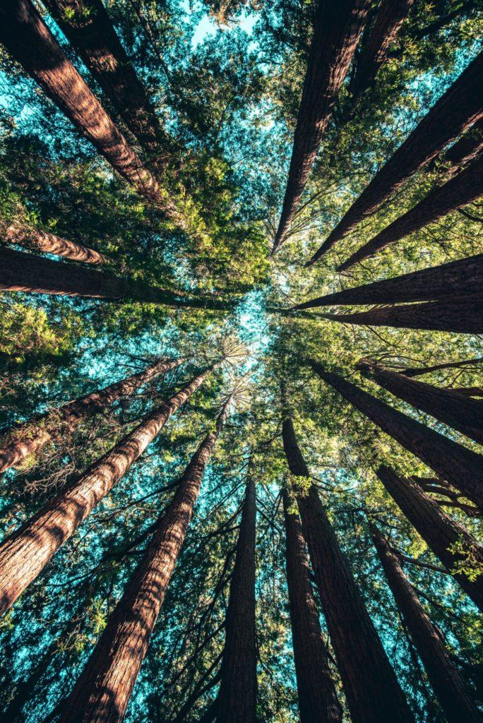 trees canopy sky