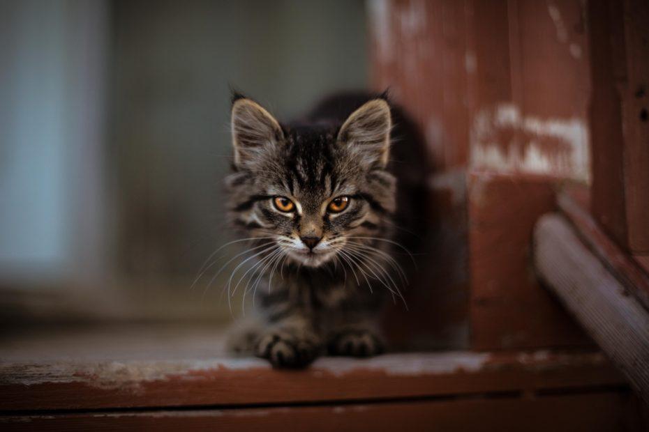 self care parenting discipline cat parents