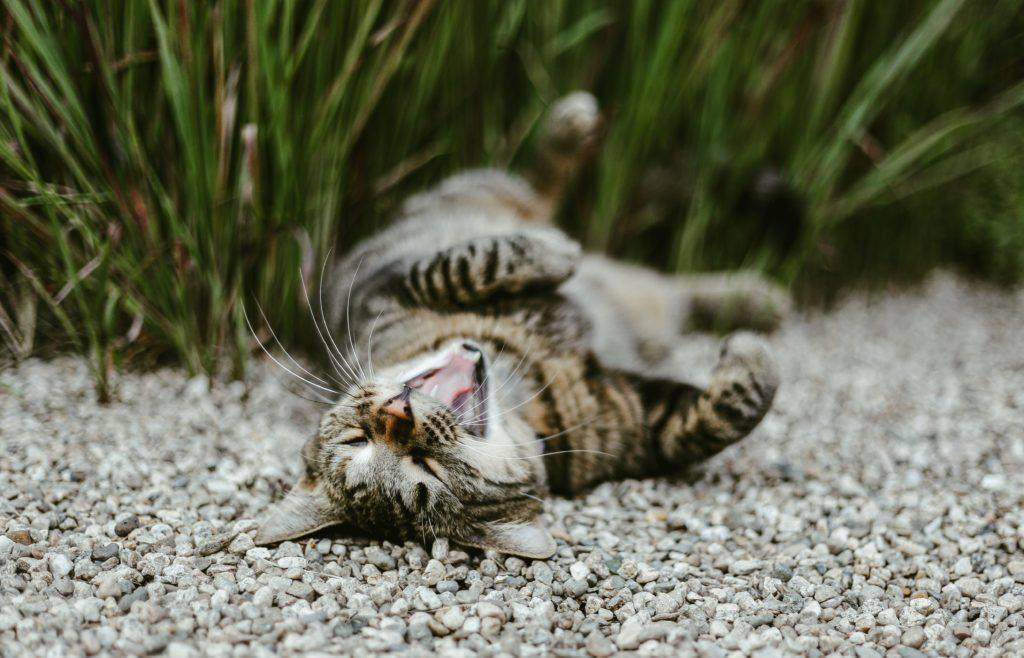 cat talks conversation fear kitten psychology journalling