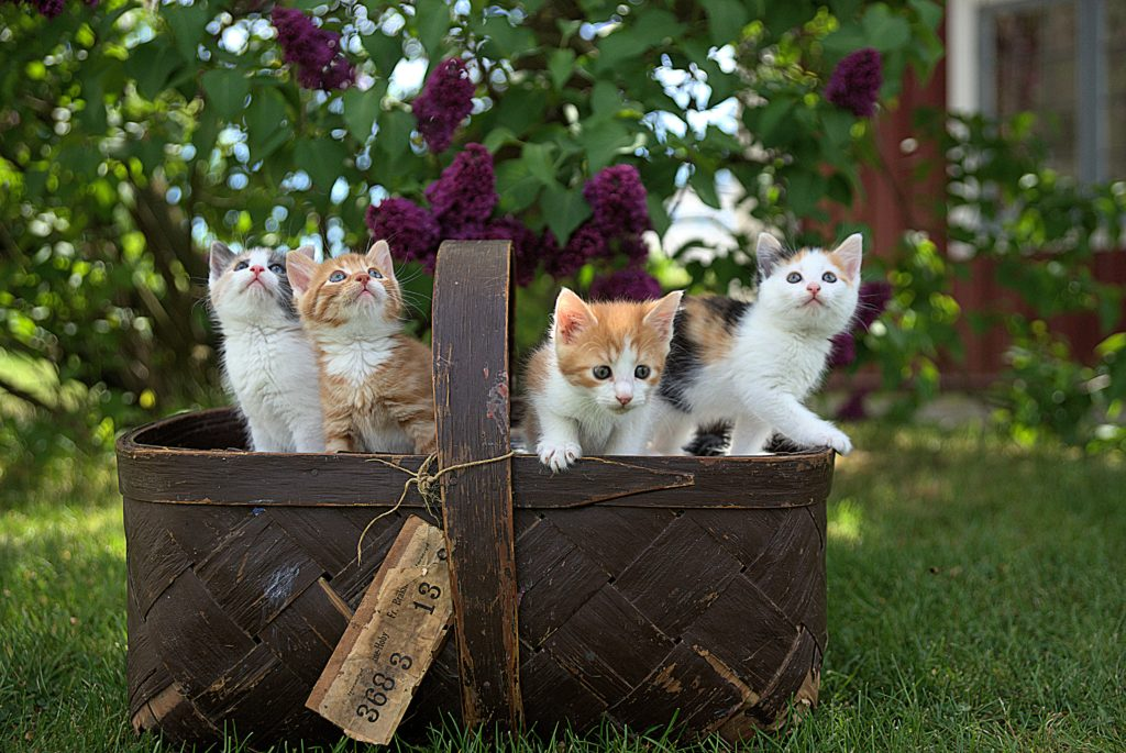 so many kittens for emotions management fear guilt