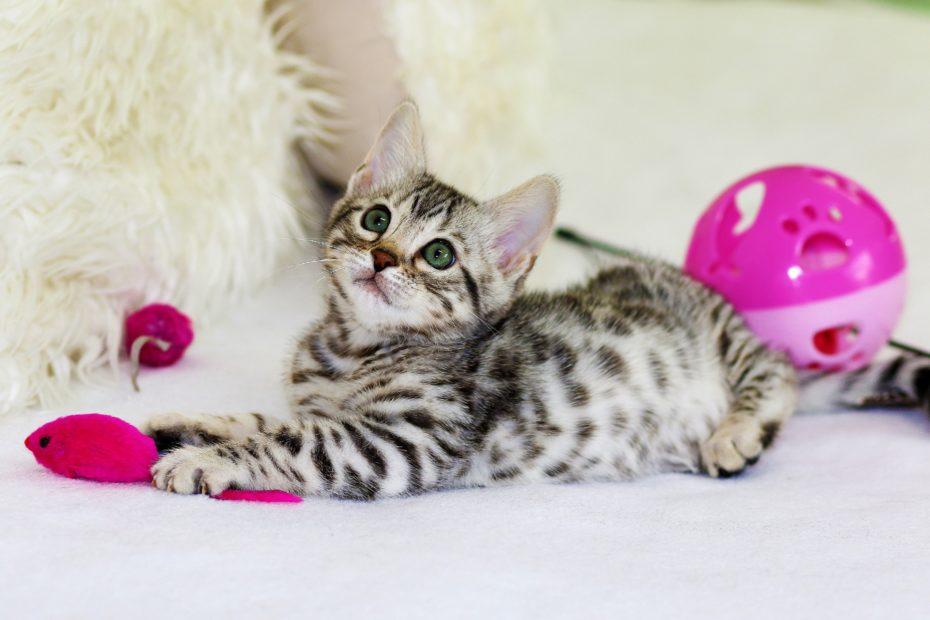 cat fear kitten perception mindset