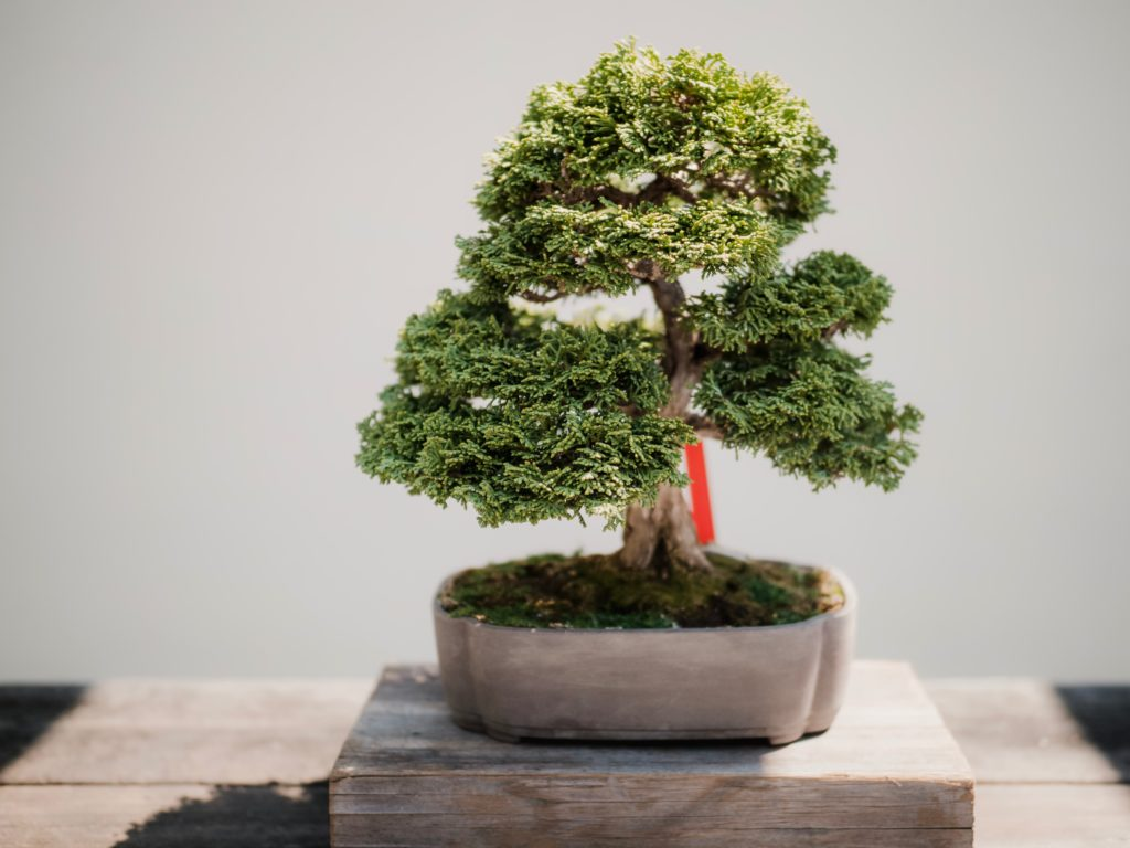 improve life plant bonsai mini tree wisdom