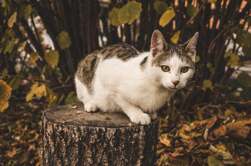 instinct nature cat tree life reality history past trauma