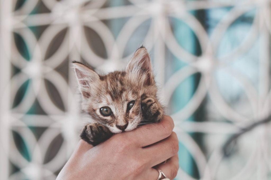talk with fear kitten conversation journal psychology