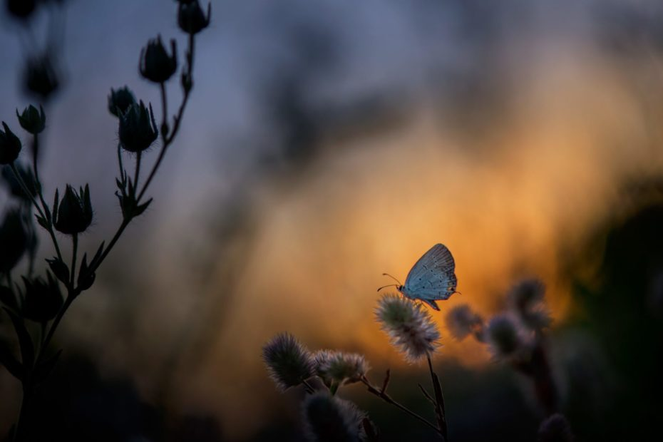 butterfly in evening