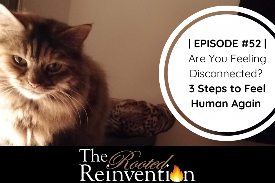 being human as a cat